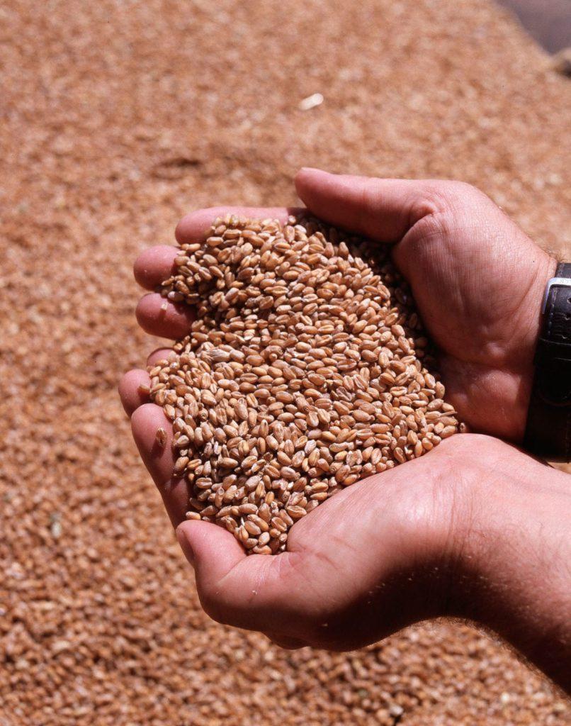 Bild valantic-Kunde-rwz-rhein-main-eg-drittgrößte-hauptgenossenschaft-im-Agrarhandel